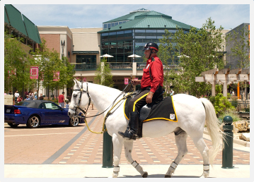 Mounted Patrol Rider and Horse