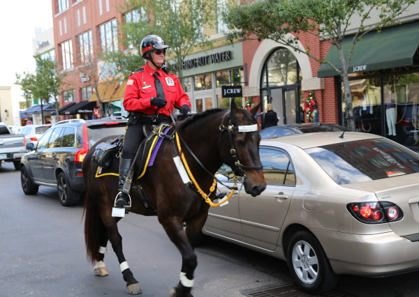 Horse and Rider in traffic
